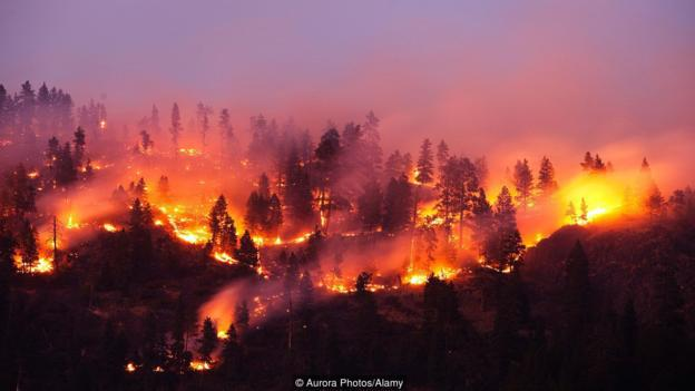 Interesting Facts About The 2017 Wildfires Marks Lumber